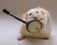 View banjobarbarian's Homepage