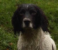 View Wet Spaniel's Homepage