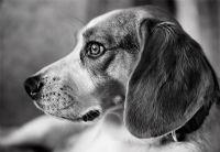 View hounddog905's Homepage