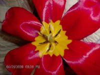 View Camo_girls_bestfriend's Homepage