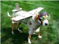 View Rocketdog's Homepage