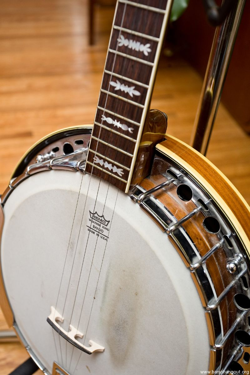 for sale fender artist 5 string banjo with archtop tonering. Black Bedroom Furniture Sets. Home Design Ideas